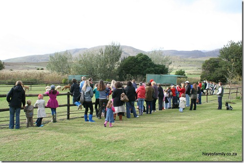 Alpaca Outing - Homeschool Western Cape and other groups together enjoying an outing to the Helderstroom Alpaca Farm near Villiersdorp