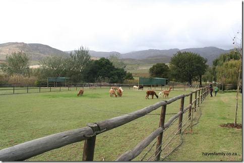 bye bye Alpaca Farm!